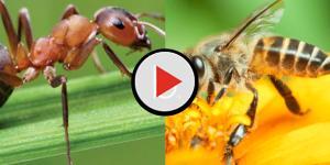 Assista: 5 tipos de picadas de insetos que você precisa saber identificar