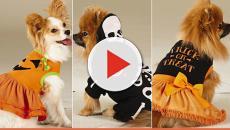 Assista: Lindos cachorrinhos prontinhos para Halloween