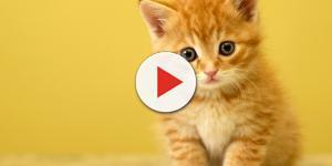 Assista: Por que os gatos ronronam e mais 4 curiosidades sobre os felinos.