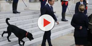 Watch French President's dog pee in fireplace at Elysee Palace