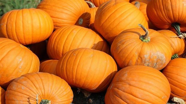 Halloween, una ricetta semplice e gustosa: zucca saltata in padella
