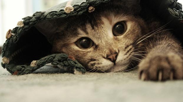 El niño de New York que salvo mas de mil gatos callejeros