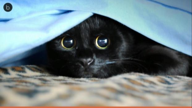 VIDEO: Halloween è alle porte, attenzione ai gatti di casa
