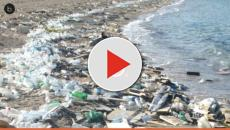 Caribbean Sea is choked by plastic and other wastes plastic material.