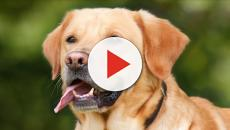 Ways to keep your dogs free of dandruff and mites