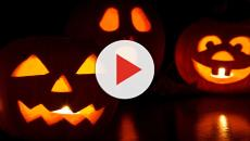 Animal shelter gains post-Halloween gift of 300 jack-o'-lanterns