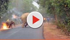 Assista: Elefantes em chamas chocam o mundo