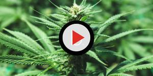 Recreational weed/pot drive-thru opens in Las Vegas