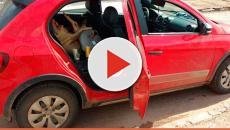 Assista: Bêbado leva porco em cadeirinha de bebê e é preso em Goiás
