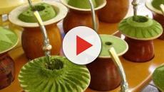 Conheça os 10 benefícios da erva-mate (melhor que café?)