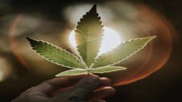 cannabis diventa gratis in tutta Italia, trovandosi in tutte le farmacie