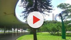 Assista: Marquise cai no Parque do Ibirapuera