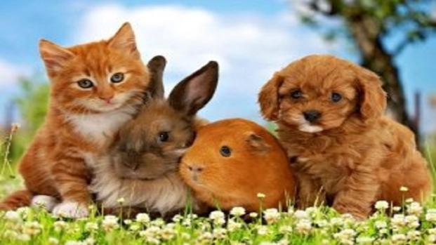 La gaffe del governo inglese: gli animali non sarebbero essere senzienti