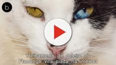 Saiba como essa receita de alimentação natural pode salvar seu gato