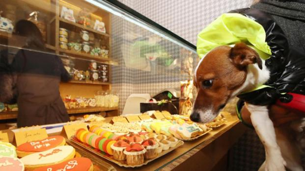 Inaugurata pasticceria per i cani