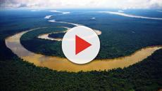 Peixes enormes foram vendidos por pescadores diretamente ao consumidor em Manaus