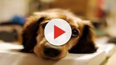 Un uomo cinese ha ammazzato brutalmente il suo cane