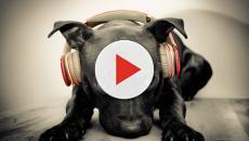 Vídeo: vídeo de cachorro comendo bebê viraliza