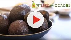 What makes cocktail avocados pitless?
