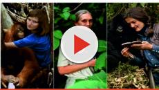 Vídeo:Los mejores libros que nos acercan a los primates