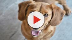 Cani: riescono a 'fiutare' un tumore nel loro padrone?