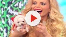 Momento trash a 'Pomeriggio 5': cane defeca in studio