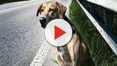 È una storia molto triste quella della cagnolina abbandonata Titina