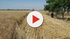 Piombo nella farina biologica, richiamo per rischio chimico: ecco i dettagli