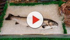Salmone: siamo sicuri della salubrità in allevamento?