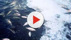 Inquinamento: alcune aree degli oceani sono 'morte'