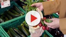 Sacchetti biodegradabili: il caos, i dubbi e la possibile soluzione per l'Italia