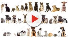 ¿Has soñado con algún animal domestico hablando?