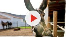 Vídeo: burro é violentado por 15 garotos