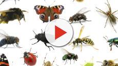 Cibo e insetti: il Ministero della Salute interviene