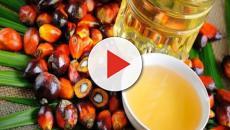L'Ue rivede la pericolosità dell'olio di palma: rischi minimi per neonati
