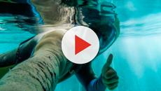 En Quinta Roja descubren la zona arqueológica bajo agua más grande del mundo