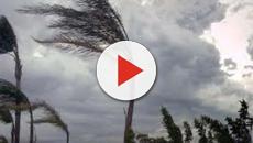 Salento: venti di bufera e danni, con alberi sradicati e disagi