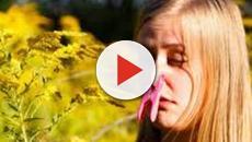 La solución para la alergia al polen: una nueva vacuna