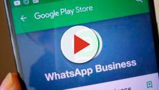 ¿Qué usos podrá tener la nueva aplicación WhatsApp Business?