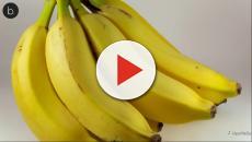 Assista: Bananas envenenadas são encontradas no Rio após casos de febre amarela
