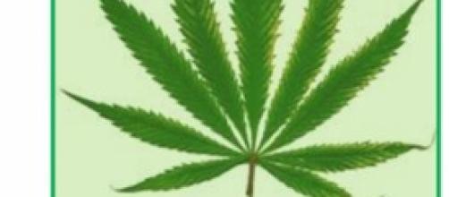 Foglia di Marijuana, simbolo della legalizzazione