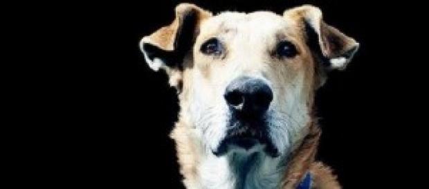 Lukánikos, el perro de las protestas