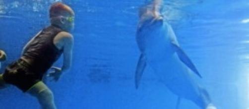 El niño  cumple su deseo de nadar con delfnes