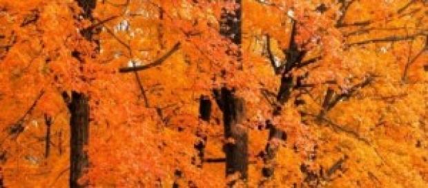 Primavera, Outubro e Esperança