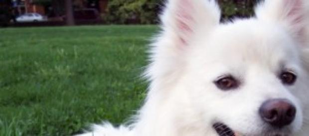 Os cães e o Ebola (Wikimedia)