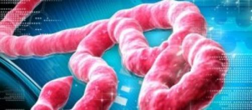virus ebola come da laboratotio