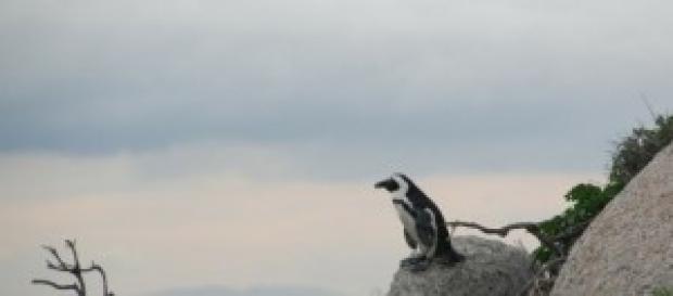 Caminata virtual por las Islas Malvinas