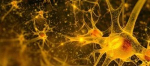 Imagen de una célula del cerebro