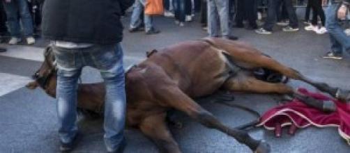 Ancora un cavallo scivolato sulle strade di Roma