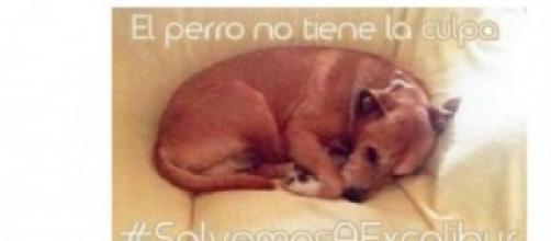 La petizione per salvare il cane Excalibur